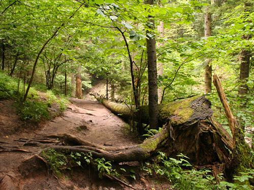 Fantasiereise Wald