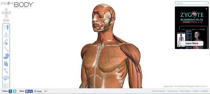 Gläserner Mensch von Google | Anatomisches 3-D-Modell