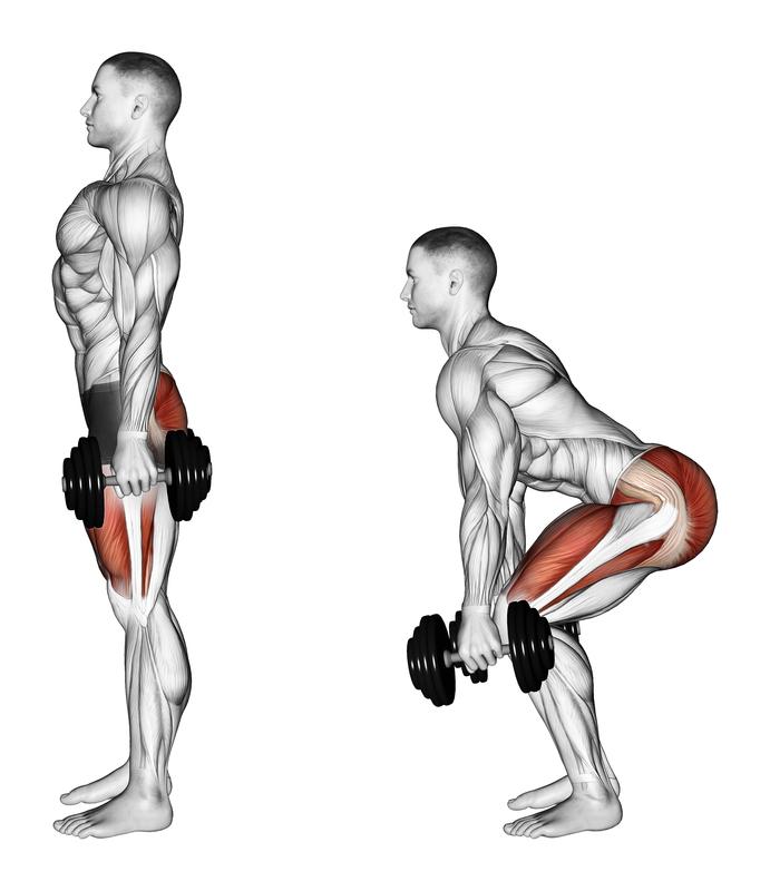 Kniebeugen oder Squats mit Kurzhantel